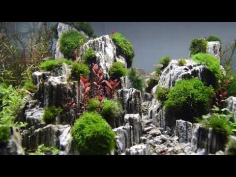 Aquascape Planted Aquarium With Glimmer Wood Rock Day 3 Youtube Planted Aquarium Aquascape Aquarium