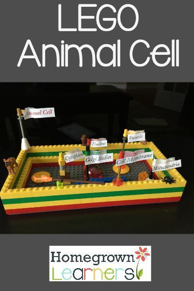 LEGO Animal Cell                                                                                                                                                     More