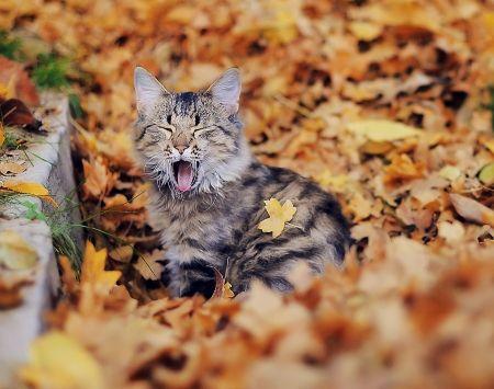 Autumn cat - Cats & Animals Background Wallpapers on Desktop Nexus ...