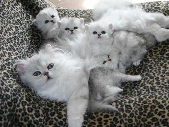 Acho que vi um gatinho! | 20 Gatas orgulhosas de seus lindos filhotes: