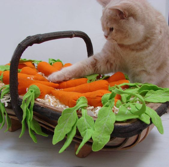 Can Cats Eat Carrots Are Carrots Safe For Cats Cattime Catnip Toys Handmade Cat Toys Cat Toys