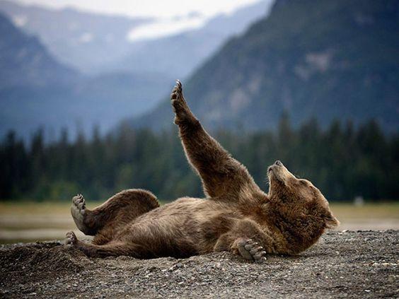 42 clichés animaliers qui montrent la poésie de la nature ! #ours