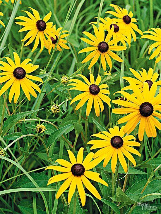 Summer Heat Perennials And Garden Beds On Pinterest