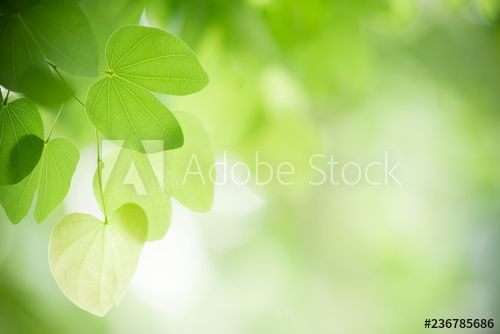 Closeup Nature View Of Green Leaf On Blurred Greenery Background In Garden With Copy Space Using As Backg Greenery Background Green Leaf Background Nature View