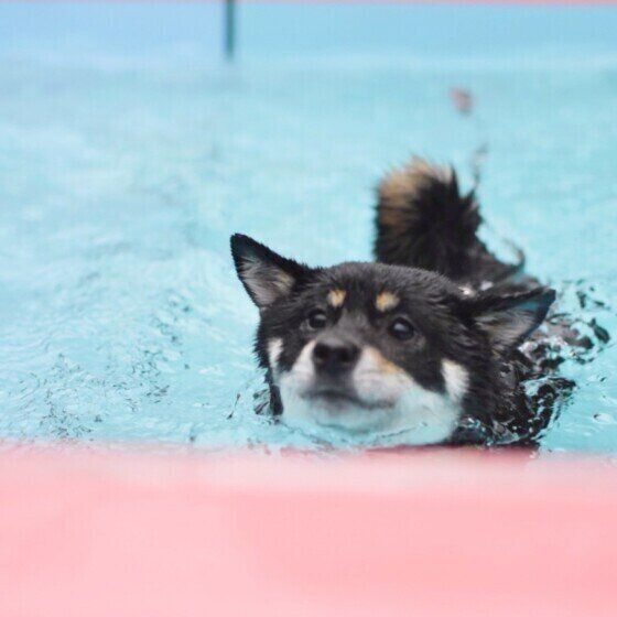 泳ぎが得意な犬種 苦手な犬種はいるの 獣医師に聞いてみた いぬのきもちweb Magazine 犬 可愛すぎる動物 いぬ
