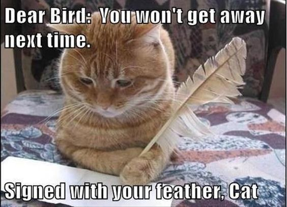 Dear Bird, You won't get away next time. Signed with your feather, Cat: