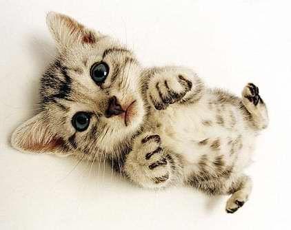 Yep. Cute kitty. I'm not ready yet to create a cute animals pinboard.