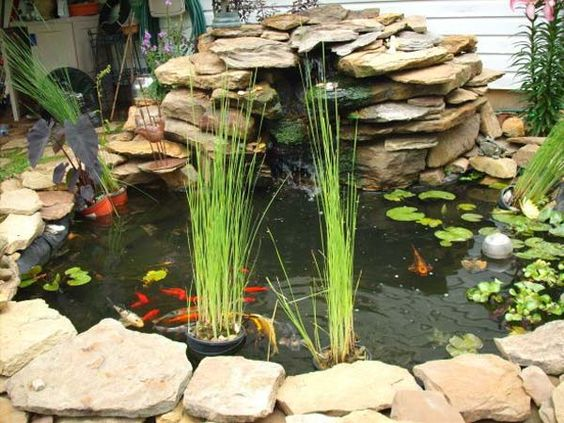Gardens planters and backyards on pinterest for Aquarium fish outdoor pond