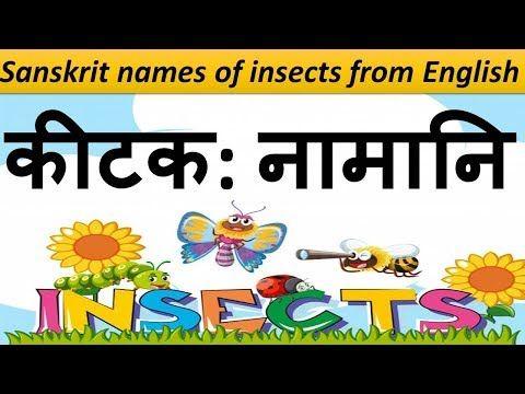 29+ Sunflower name in sanskrit ideas in 2021
