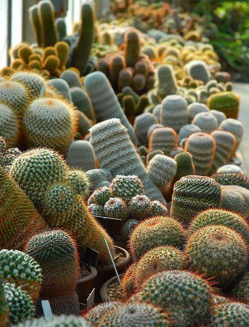 Botanical Cactus Garden - Huntington Library Museum and Botanical Gardens, Southern California.: