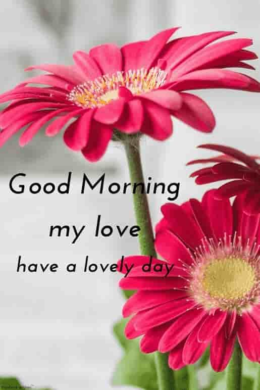 Best Good Morning Hd Images Wishes Pictures And Greetings Good Morning Flowers Good Morning Flowers Pictures Good Morning Images