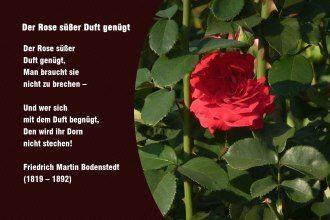 Der Rose süßer Duft genügt – Friedrich Martin Bodenstedt