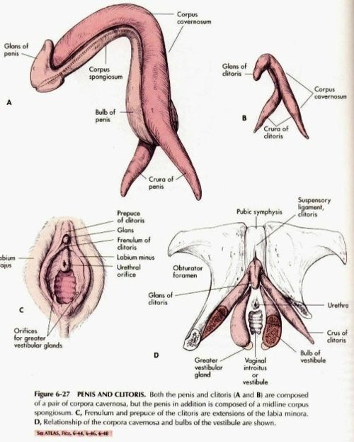 Natural vulva photos