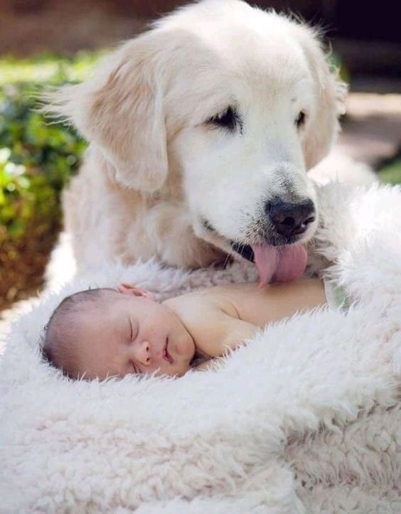25 Times Dogs Proved They Understand Unconditional Love Better