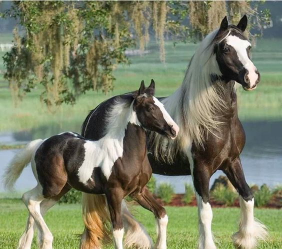 i love your horse...