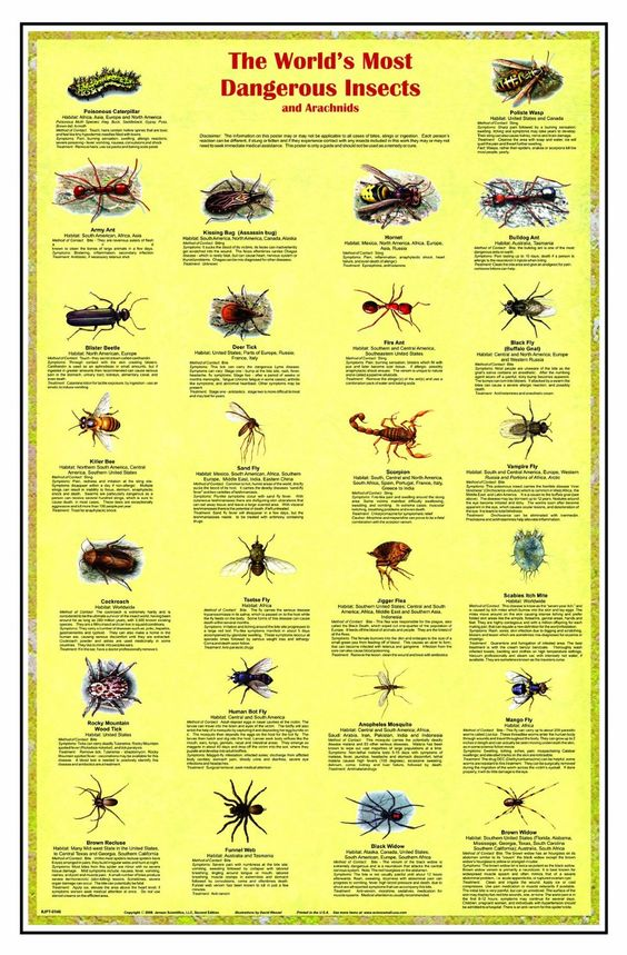 """World's Most Dangerous Insects & Arachnids Laminated Poster 38x26"""""""
