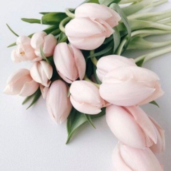 Spring is finally here! And so are all the beautiful wedding flowers that come with it! See our top 8 flowers to include in your spring wedding up on the blog •link in bio• #cinderollies #besweettoyourfeet
