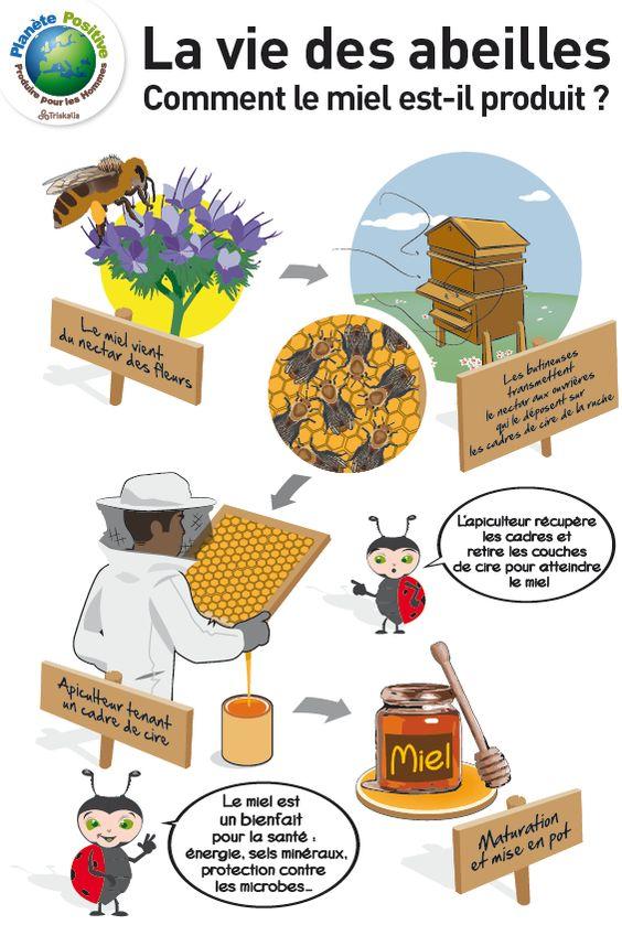 une ruche  comment  u00e7a marche  des cultures pour les