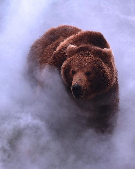 Cool photo bear coming out of the mist