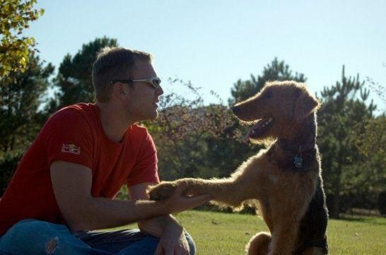 El masaje de las orejas del perro: trucos y precauciones
