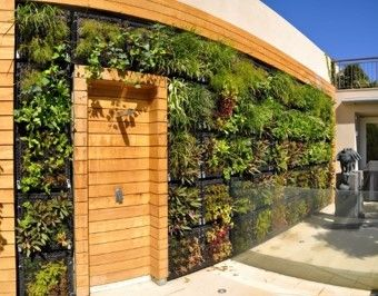 Green garden wall. Eco wall!!