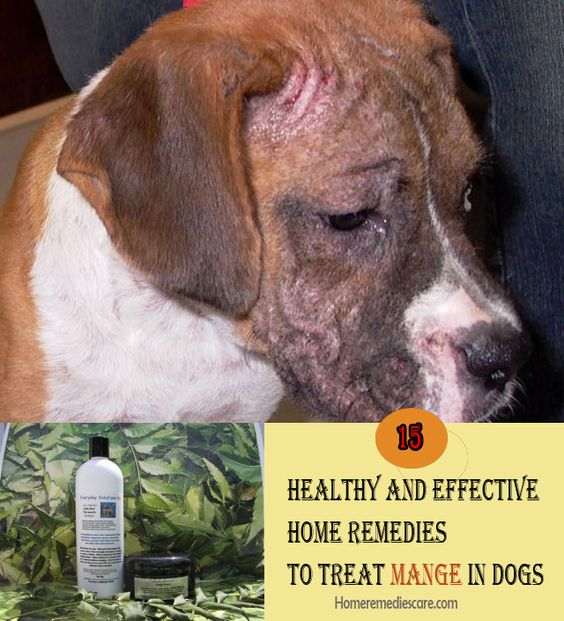 15 Healthy And Effective Home Remedies To Treat Mange In