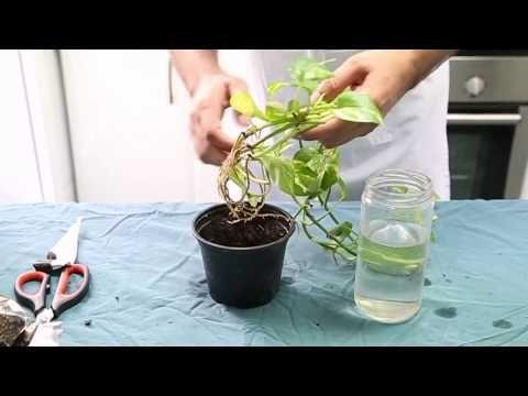 24++ Como trasplantar una planta ideas