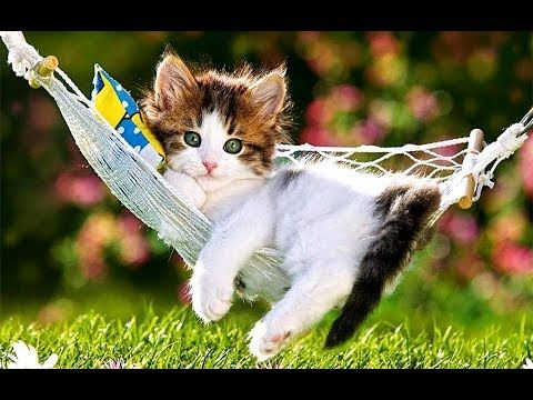 So Many Cute Kittens Videos Compilation Funny Cat Ever 2018 Http Viral Videos Live 2018 11 01 So Many C Funny Cute Cats Cute Cat Wallpaper Kittens Cutest
