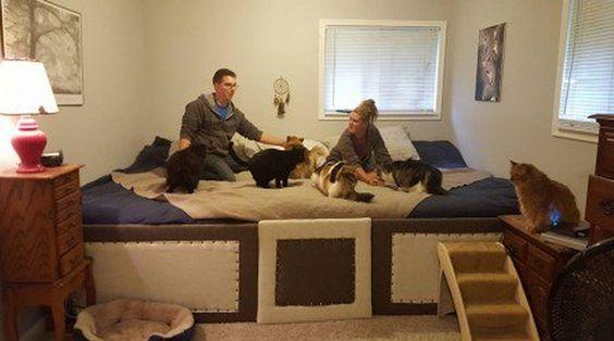 Casal constrói cama gigante para dormir com os 7 animais de estimação