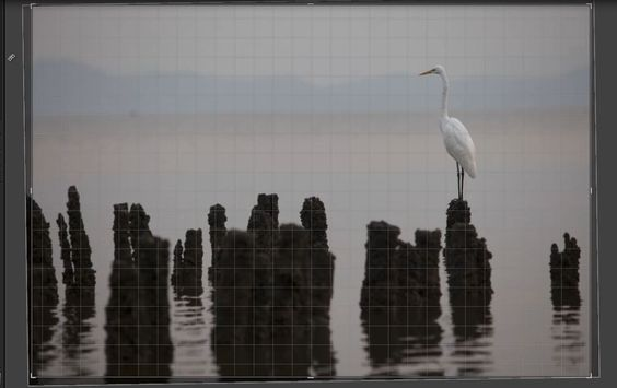 Lightroom 4 Cropping Tool in Complete Detail