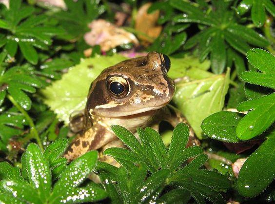 Image result for garden frog Frog medicine Pinterest