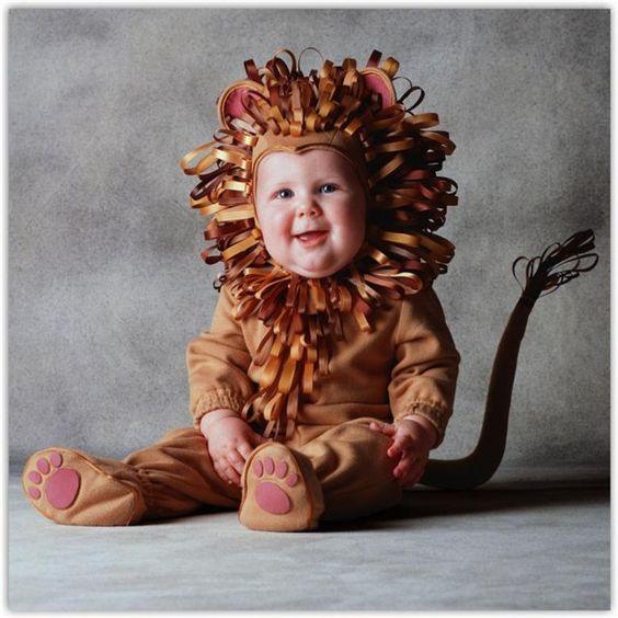 bebê leão: