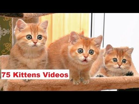 Never Let You Go Cuteanimalshare Com Cute Kitten Gif