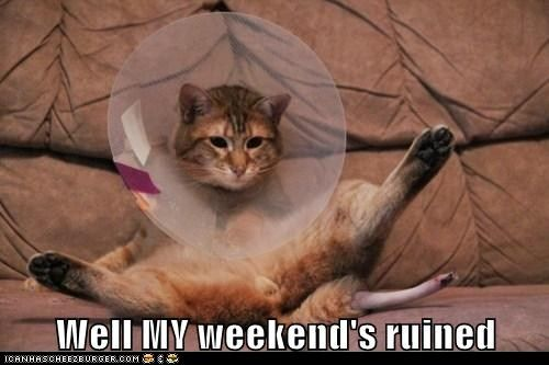 funny cat pictures - Well MY weekend's ruined