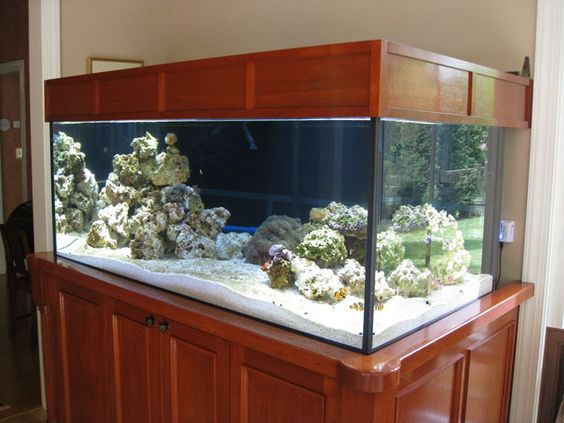 Wish our update of the current ultra modern fish tank for Modern fish tanks
