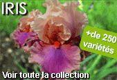 Bouleau blanc - Plantes et Jardins