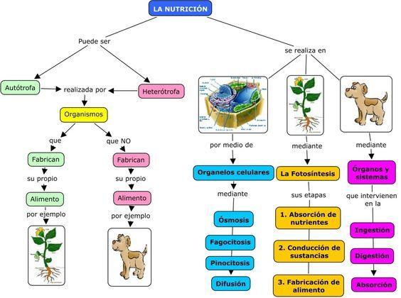 Nutricion Autotrofa Y Heterotrofa Yahoo Dating Dating Education Biology