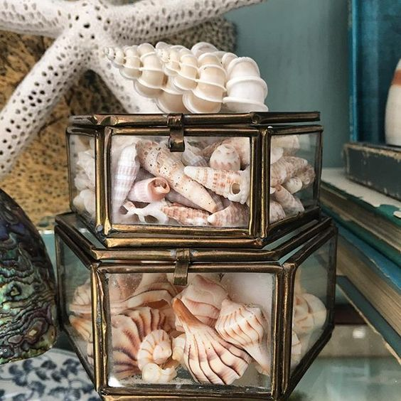 Tiny shells in vintage brass and glass boxes. Look for similar items on www.palmtreesandpelicans.com in the seashell display section