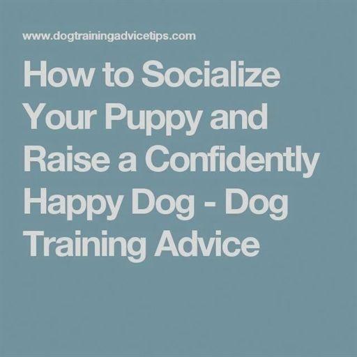 Hunting Dog Training Zak Dog Training Leash Dog Training