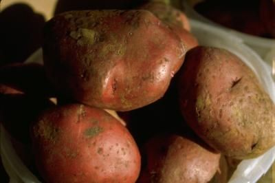 How to Can Red Potatoes