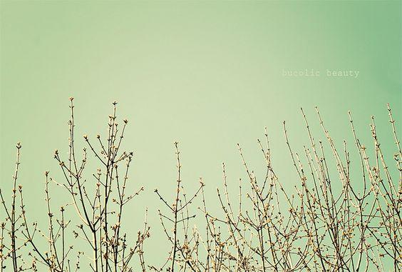 breezes in the treezes