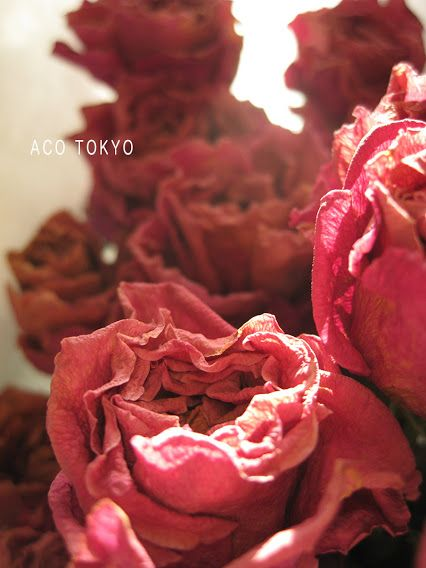ACO TOKYO- Google+