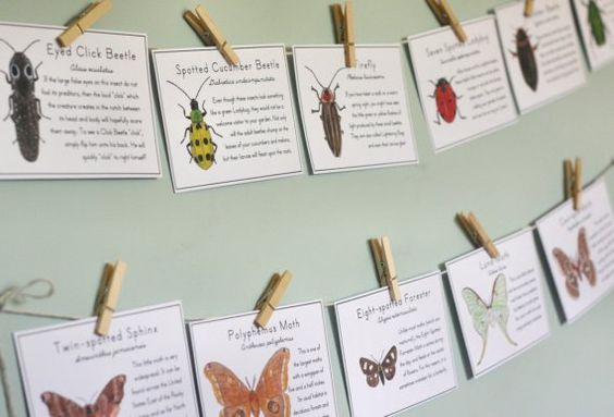 Insect banner with information on each insect. Kind of a cool environmental education decor idea. Could also be used for games.