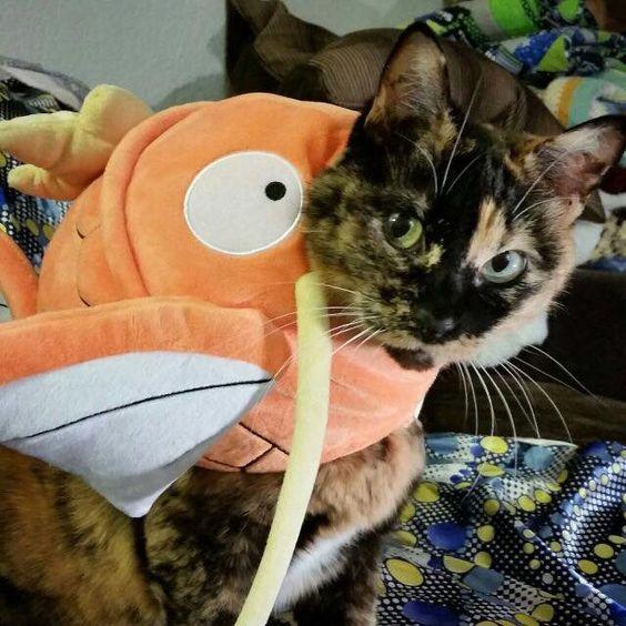 Gato Magikarp listo para el duelo pokemon