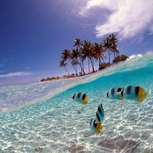 Bunaken National Marine Park, Indonesia -- WOW