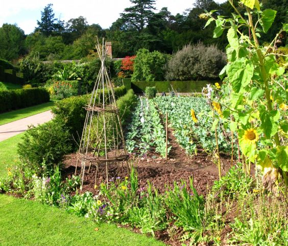 Big vegetable gardens large garden ideas vegetable for Planting a small vegetable garden layout