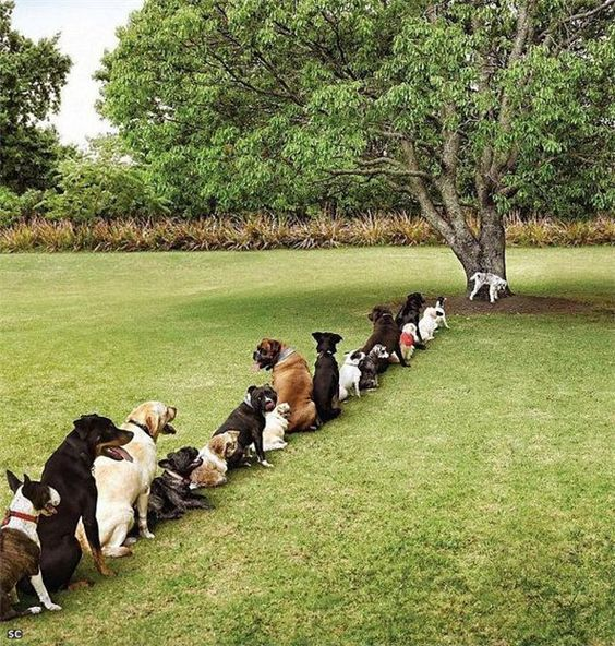 Image result for dogs standing in line