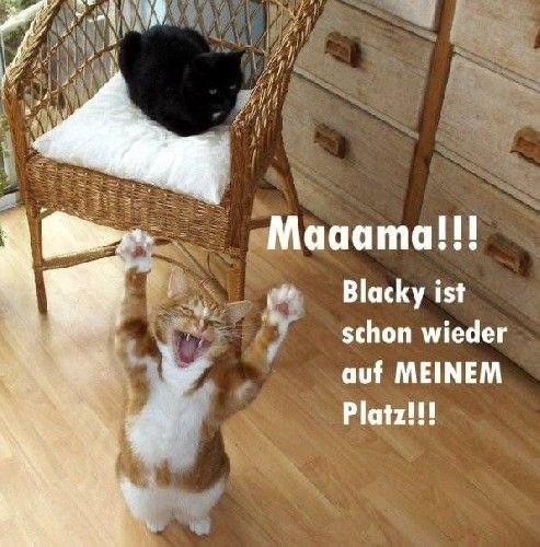 lustige tierbilder mit sprüche | GB Bild - Gästebuchbilder, GB Bilder, GB Pics - Katzen