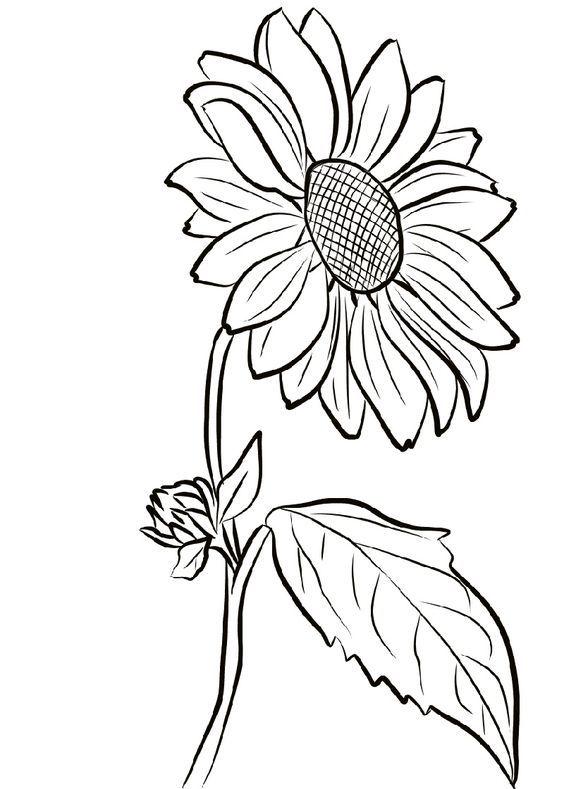 Girasol Para Colorear En 2020 Girasoles Dibujo Girasoles Dibujos A Lapiz Rosas