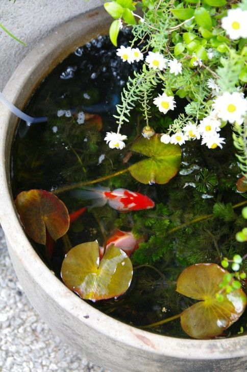 Adding Fancy Goldfish To A Container Pond Is Easy And Really Fun Place The Container In An Are Container Water Gardens Indoor Water Garden Container Fish Pond